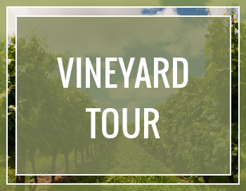 Layton's Chance Vineyard & Winery - Vineyard Tour