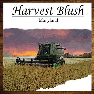 Product Image for Harvest Blush